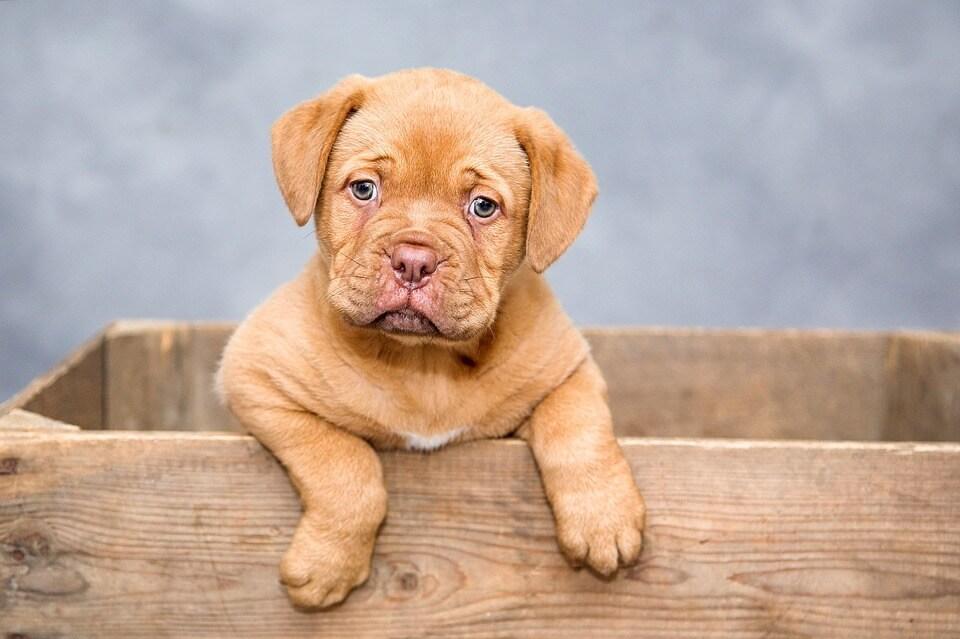 Alergia u psów – co robić?